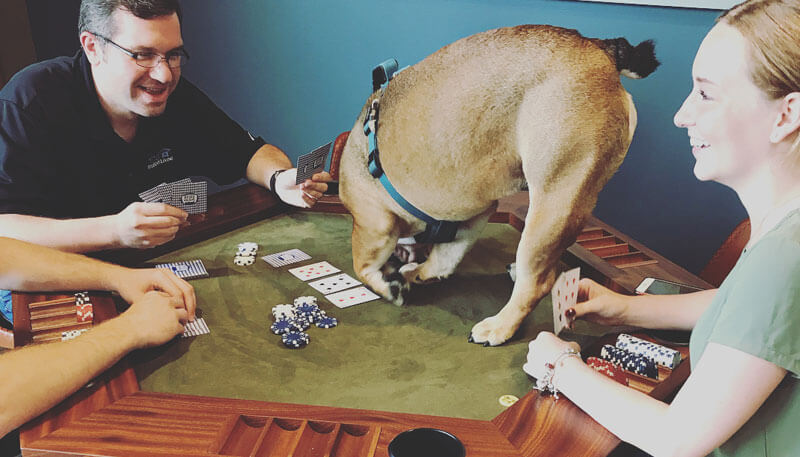Dozer on the poker table at Lakeside Commons off campus apartments
